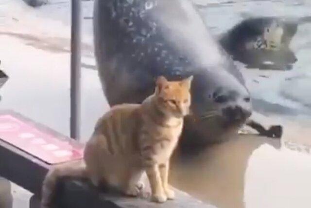 Тюлень попытался впечатлить кошку своими трюками. Его не удостоили даже взглядом