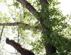Ландшафтный дизайнер поддержала 'ротацию' зеленых насаждений в Саратове