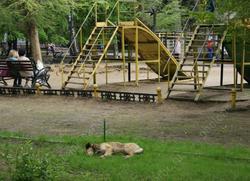 За месяц обнаружена 21 'нестандартная' детская площадка