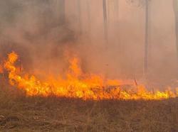 Ущерб от лесных пожаров в области оценен в 9 млн рублей