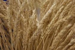 Области выделили более 400 млн в рамках зернового демпфера