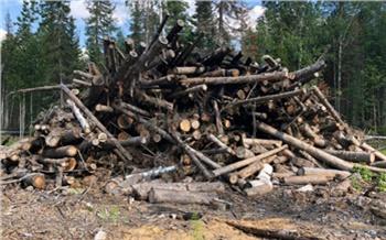 Житель Красноярского края вырубил хвойные деревья на 3 миллиона: начато следствие