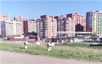 Красноярск наконец-то начали обрабатывать от клещей