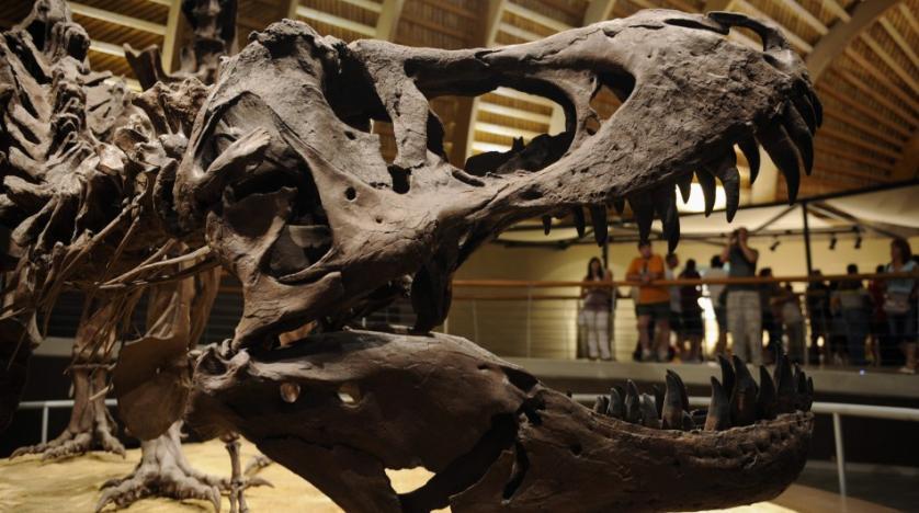 Ученые установили окончательную причину вымирания динозавров