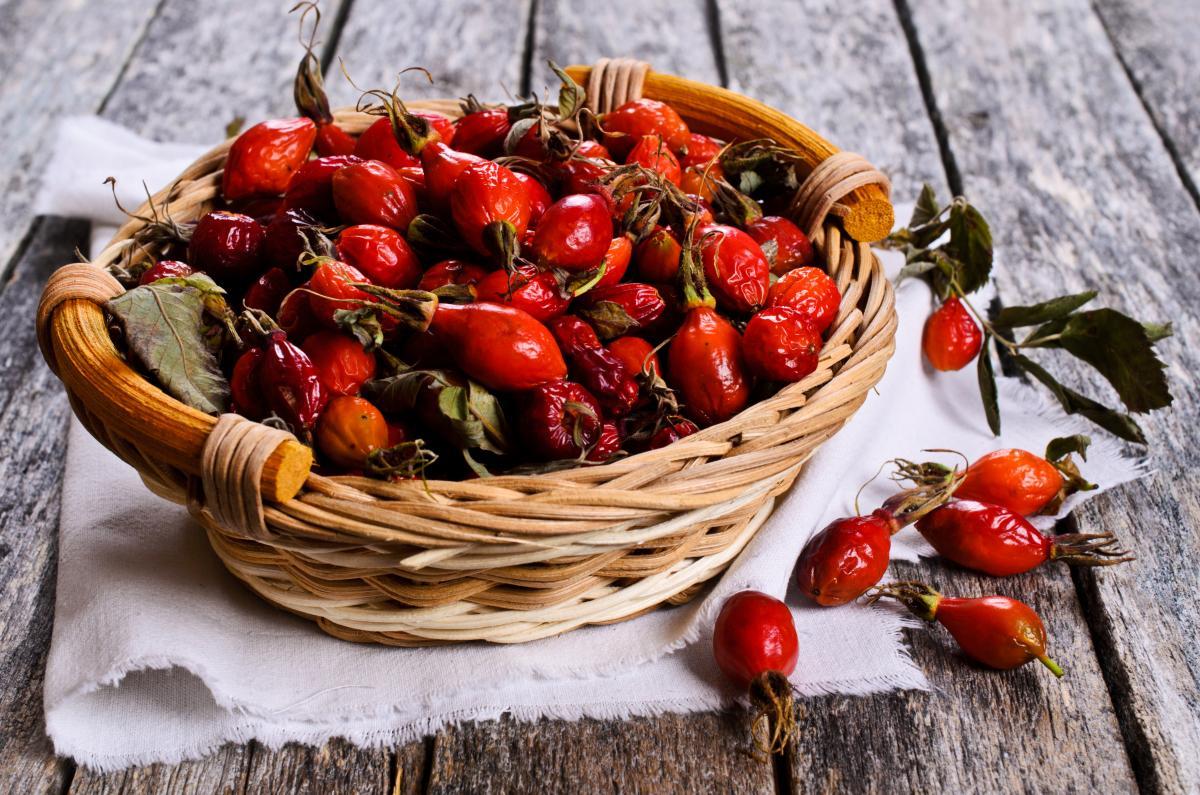 Польза и вред шиповника: действие ягод на организм человека