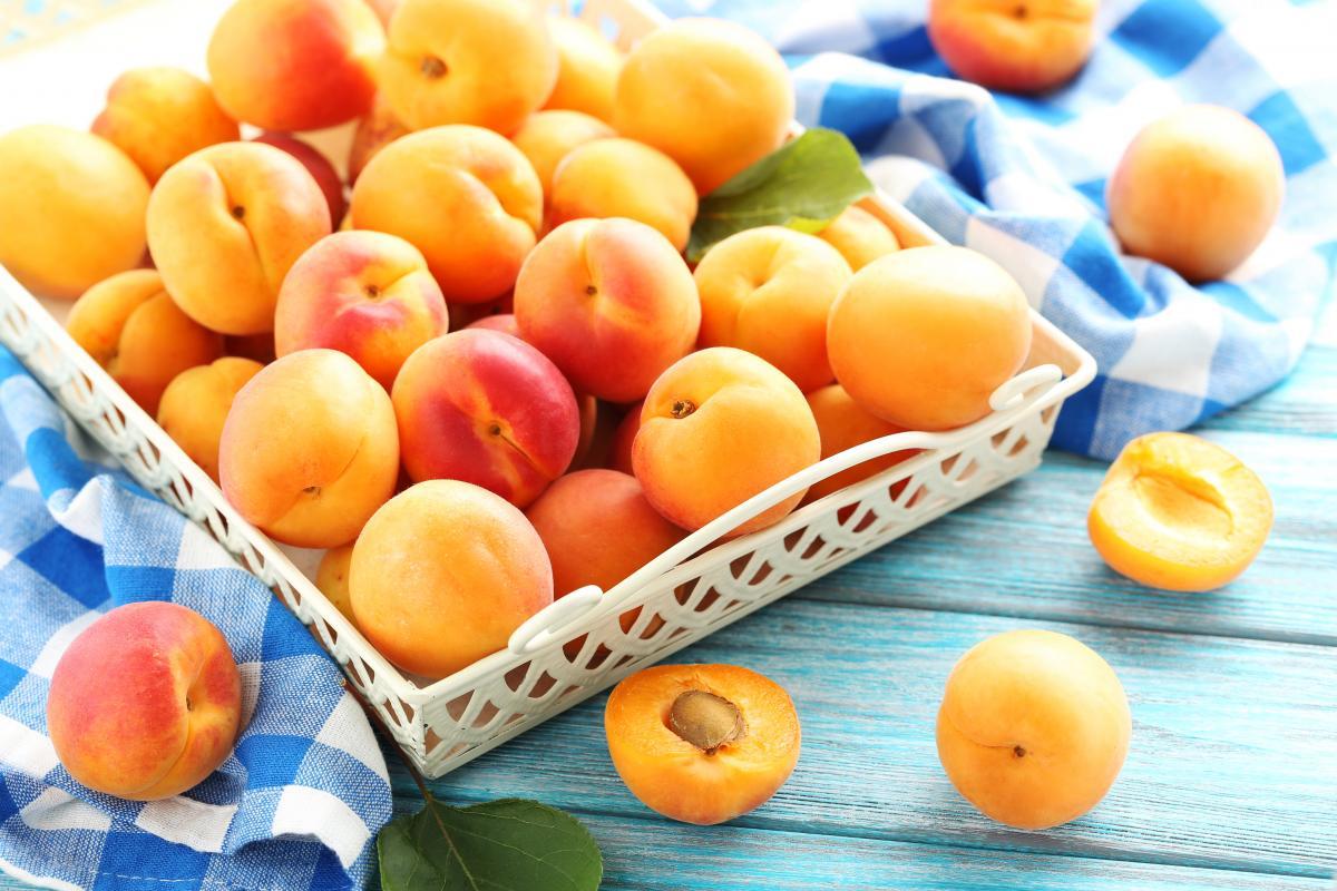 Абрикосы: польза и вред плодов, рецепты заготовок на зиму