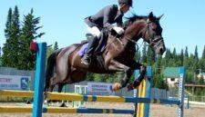 «Лошадь — это спортивный болид»: почему конный спорт в Кузбассе не для всех