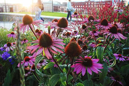Фестиваль «Цветочный джем» возвращается в столицу