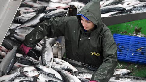 Китай режет российскую рыбу // С поставками продукции в эту страну возникли сложности
