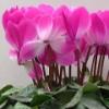 Омский сквер украсили цветами, несмотря на отмену «Флоры»