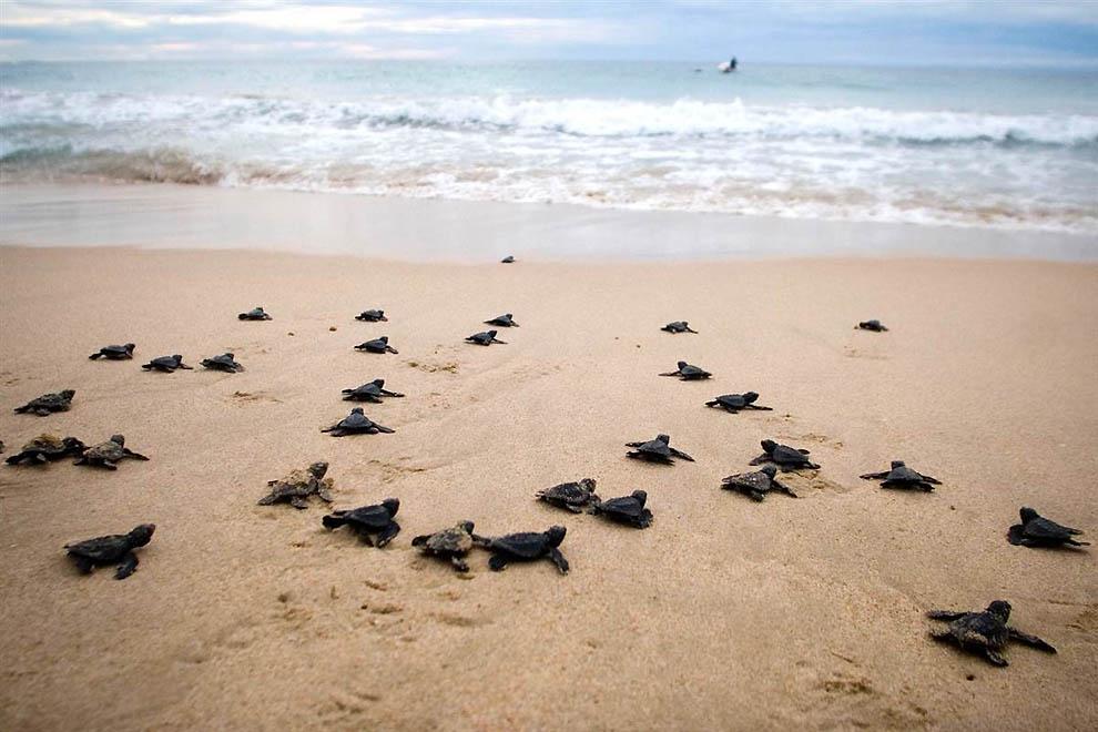 5 мест для знакомства с черепахами