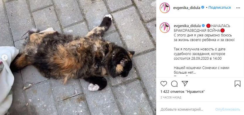 «Бракоразводная война?» — После убийства кошки жена Дидюли боится за жизнь дочери