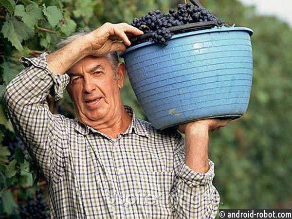 Студенты СПбГУ разработали геоинформационную систему для виноделов