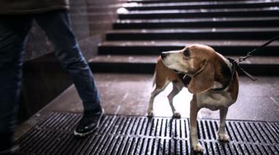 Выход в магазин и выгул собак не потребуют пропуска в Подмосковье