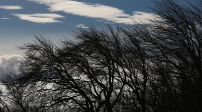 В Челябинской области предупредили о резком усилении ветра