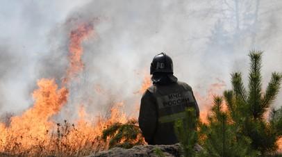 За сутки в России ликвидировано 38 лесных пожаров