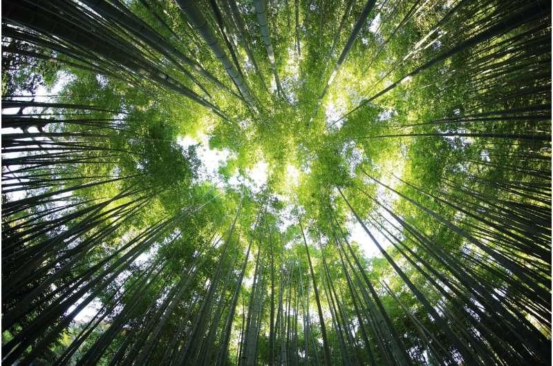 Использование древесины обеспечивает климатические выгоды от коммерческих лесов