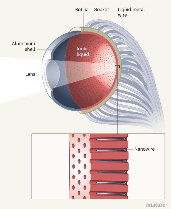 Создан искусственный глаз, который видит в темноте