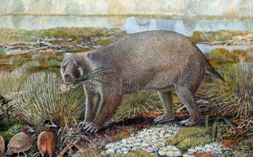 В Австралии открыто новое животное, но оно уже вымерло