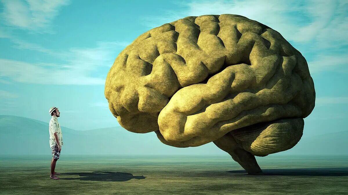 Ученые выяснили почему мозг человека больше, чем у обезьян