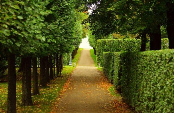 Петербургские музеи и музеи-заповедники не знают, когда откроются парки