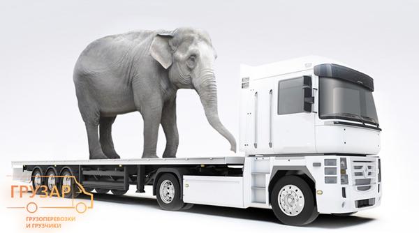 Что нужно знать о негабаритных перевозках?