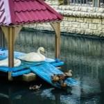 Лебеди из центрального парка Ставрополя не могут вернуться домой из-за коронавируса