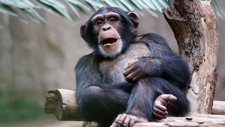 Ученые выяснили, что младенцы и шимпанзе смеются одинаково