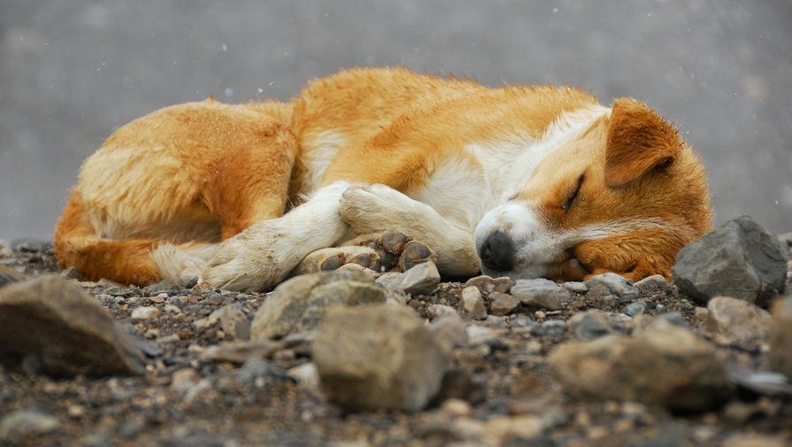 Против главного ветеринара Якутска возбудили дело после убийства животных