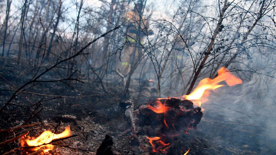 МЧС предлагает ужесточить наказания за пожары по неосторожности в России
