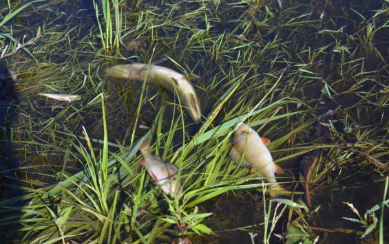 В Курской области не осталось чистых рек