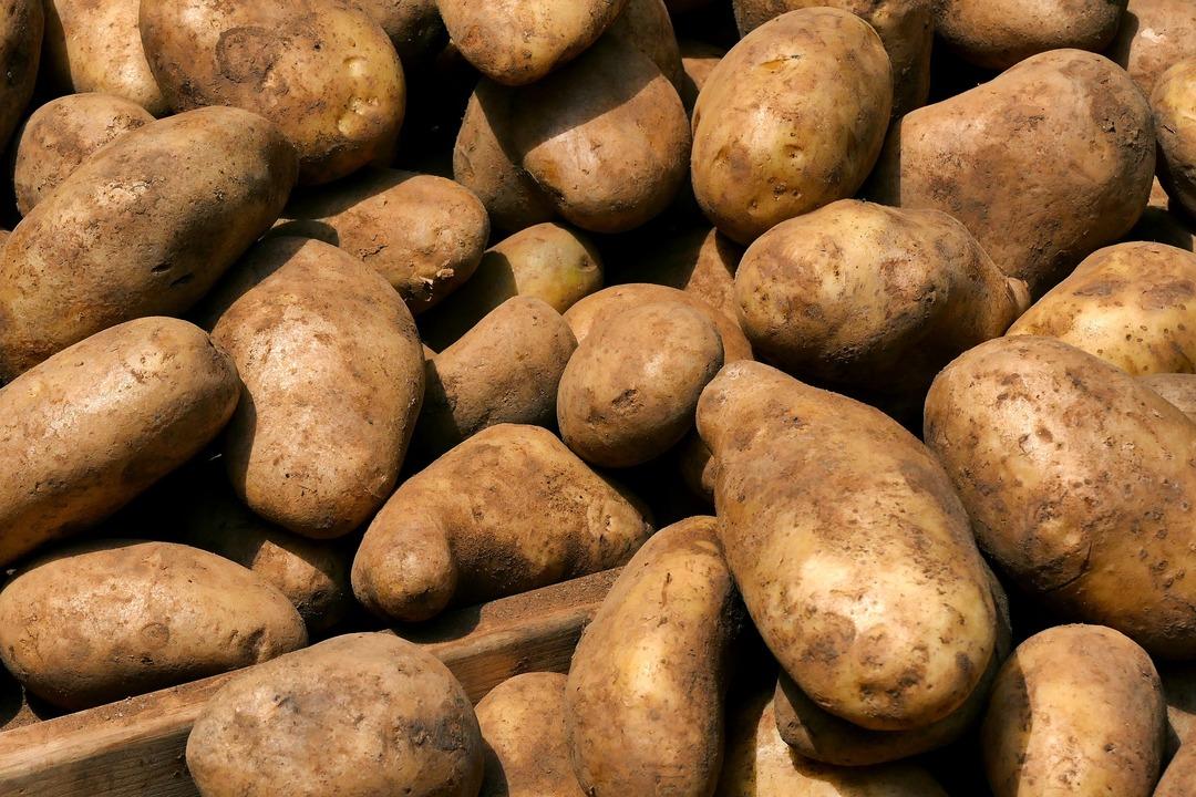 Россиян предупредили о подорожании картофеля к зиме