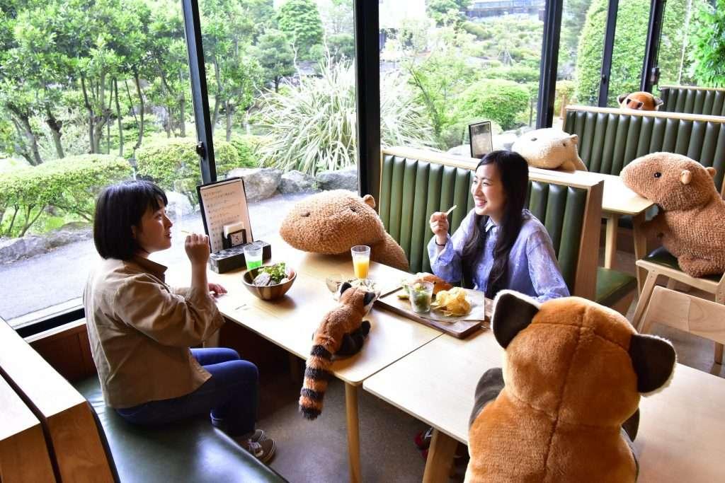 Ресторан в Японии посадил за столы плюшевых капибар, чтобы гости соблюдали социальную дистанцию