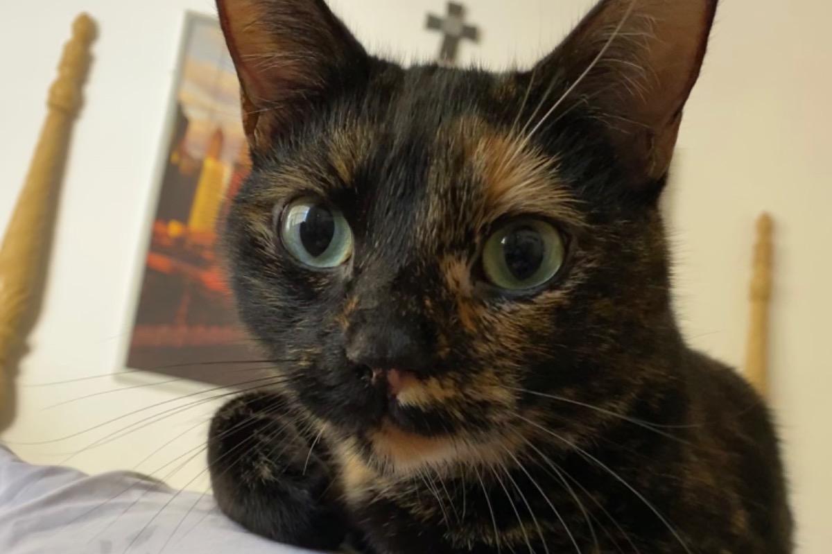 Родители выбросили кошку дочери, пока та была в колледже, и девушка развернула спасательную операцию