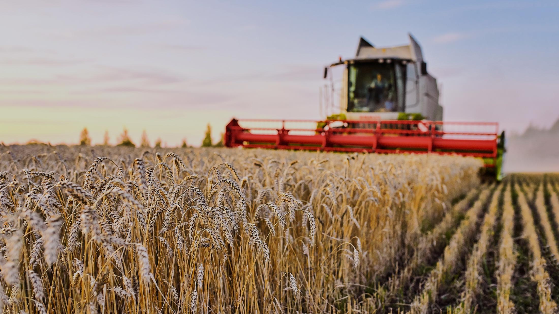 Зерновая сверхдержава. Россия заработала на пшенице больше, чем на оружии