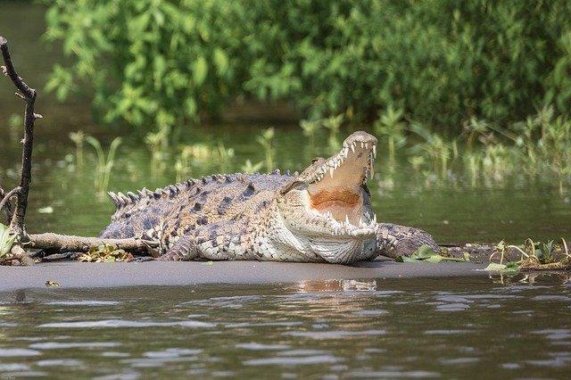 'Индийский Доктор Смерть', скормивший крокодилам более 100 водителей, сбежал во время тюремного 'отпуска'