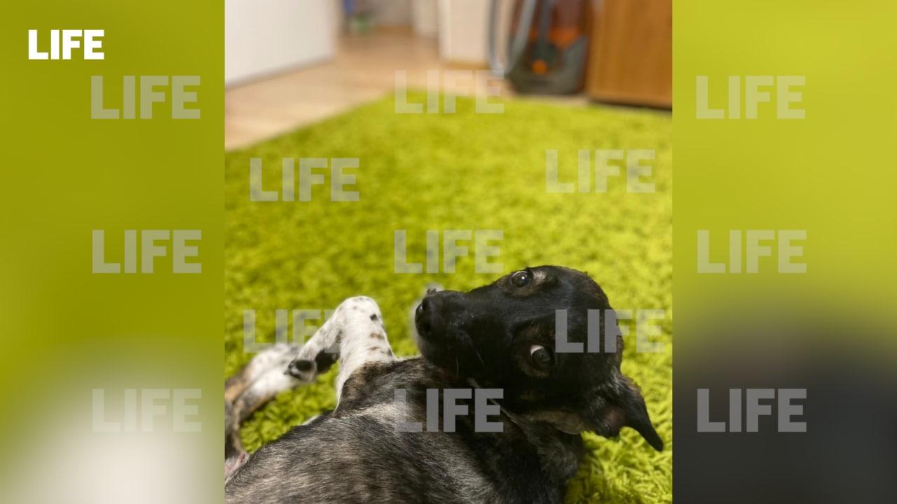 На поиски пропавшей из багажа в Домодедово собаки брошена оперативная группа